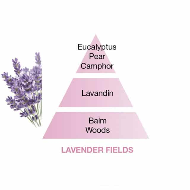 duftpinde lavendel - maison berger lavender fields duftpyramide